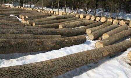 submisja drewna cennego krosno brzozów